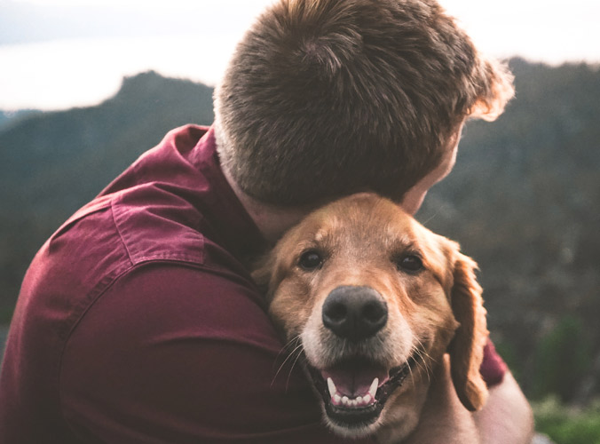 vivir de alquiler con tu mascota soluciones tengacasa